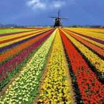 NT2 Nederlands